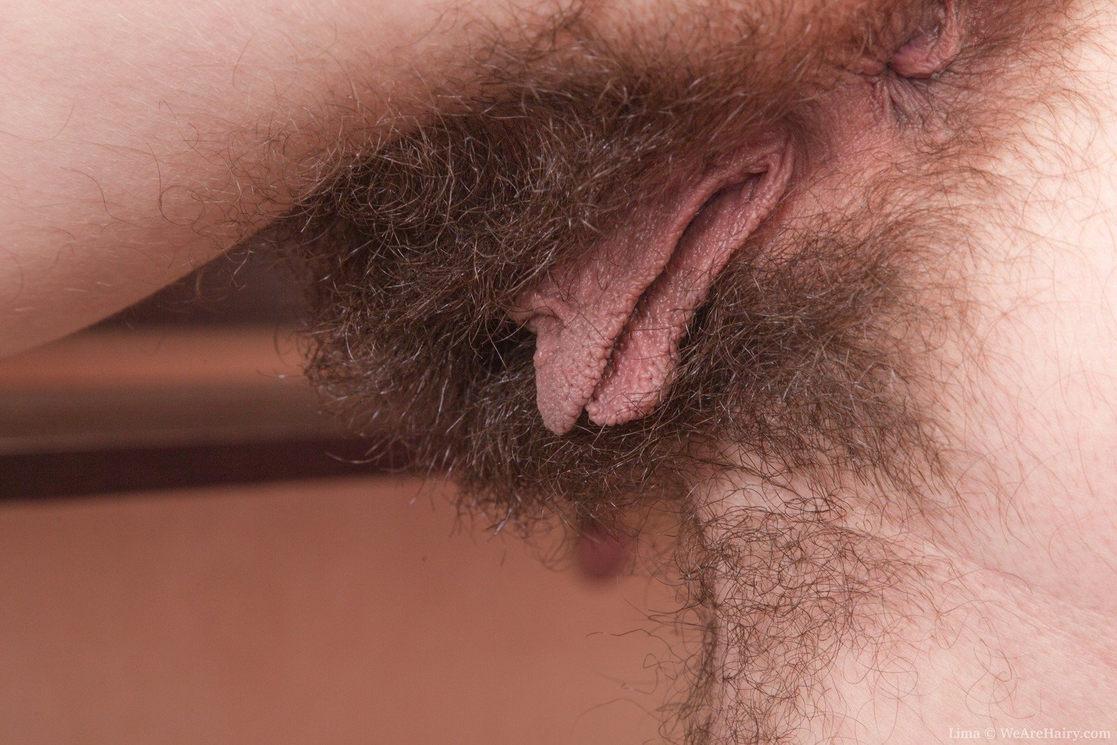 bbw hairy hd porn there